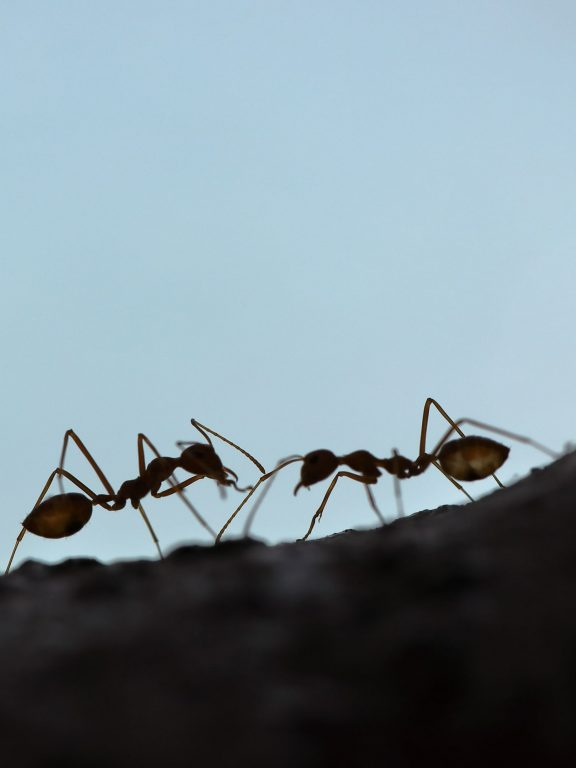 Ants, Bees and Humans